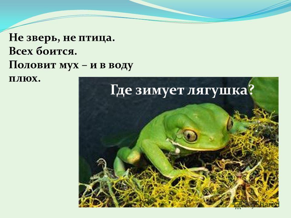 Не зверь, не птица. Всех боится. Половит мух – и в воду плюх. Где зимует лягушка?