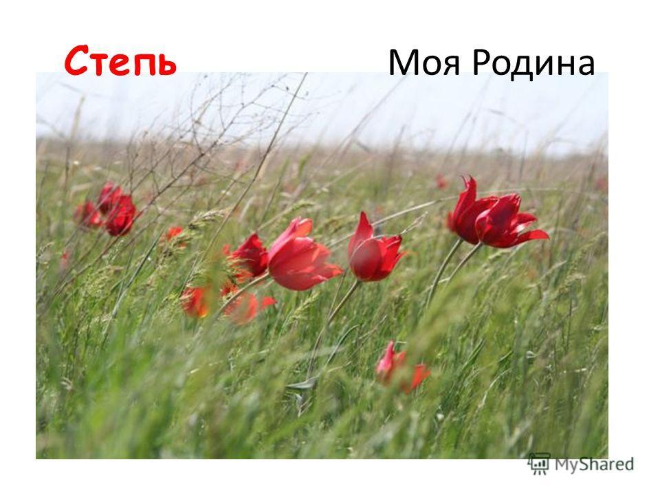 Моя Родина Школа в хуторе «Красный Маныч»