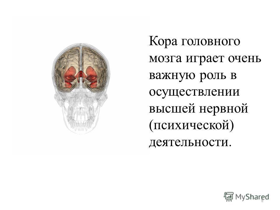 Кора головного мозга играет очень важную роль в осуществлении высшей нервной (психической) деятельности. 9