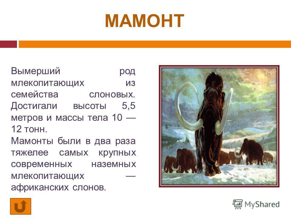 МАМОНТ Вымерший род млекопитающих из семейства слоновых. Достигали высоты 5,5 метров и массы тела 10 12 тонн. Мамонты были в два раза тяжелее самых крупных современных наземных млекопитающих африканских слонов.