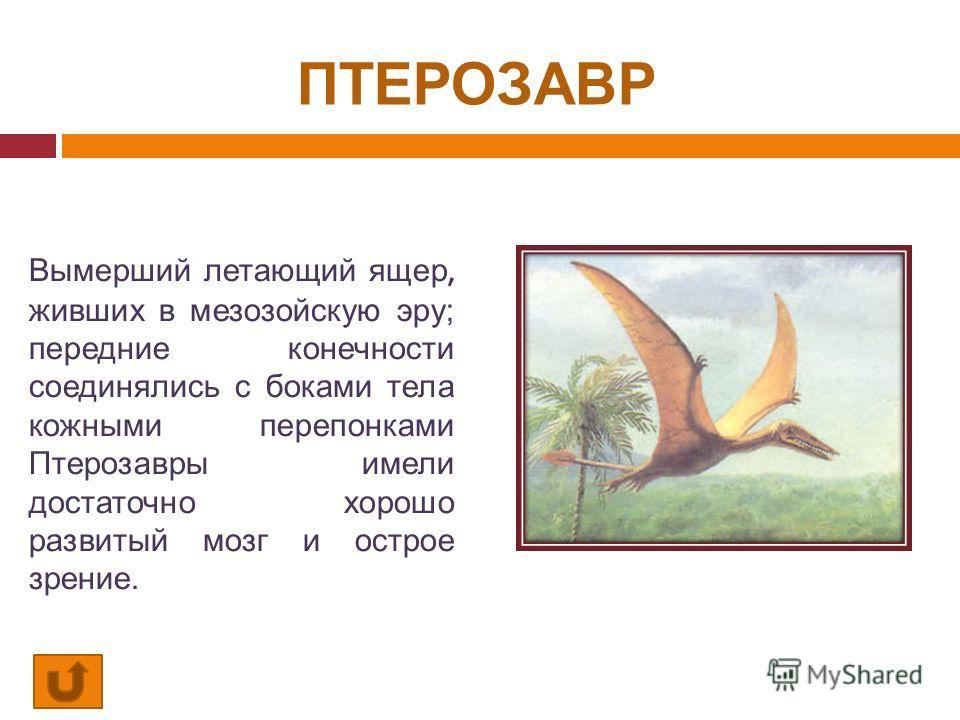 ПТЕРОЗАВР Вымерший летающий ящер, живших в мезозойскую эру; передние конечности соединялись с боками тела кожными перепонками Птерозавры имели достаточно хорошо развитый мозг и острое зрение.