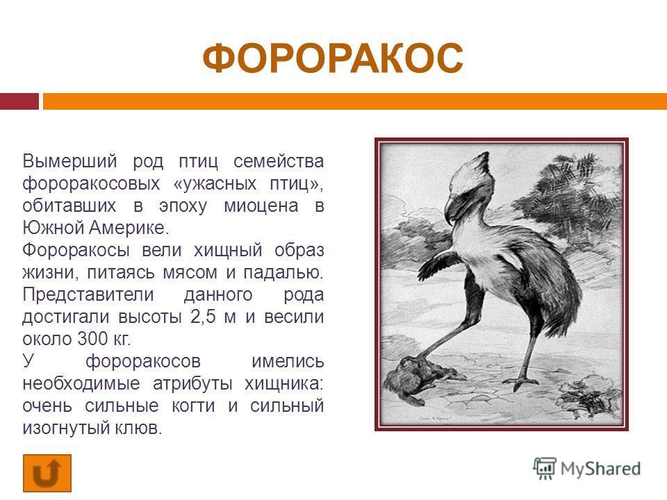 ФОРОРАКОС Вымерший род птиц семейства фороракосовых «ужасных птиц», обитавших в эпоху миоцена в Южной Америке. Фороракосы вели хищный образ жизни, питаясь мясом и падалью. Представители данного рода достигали высоты 2,5 м и весили около 300 кг. У фор