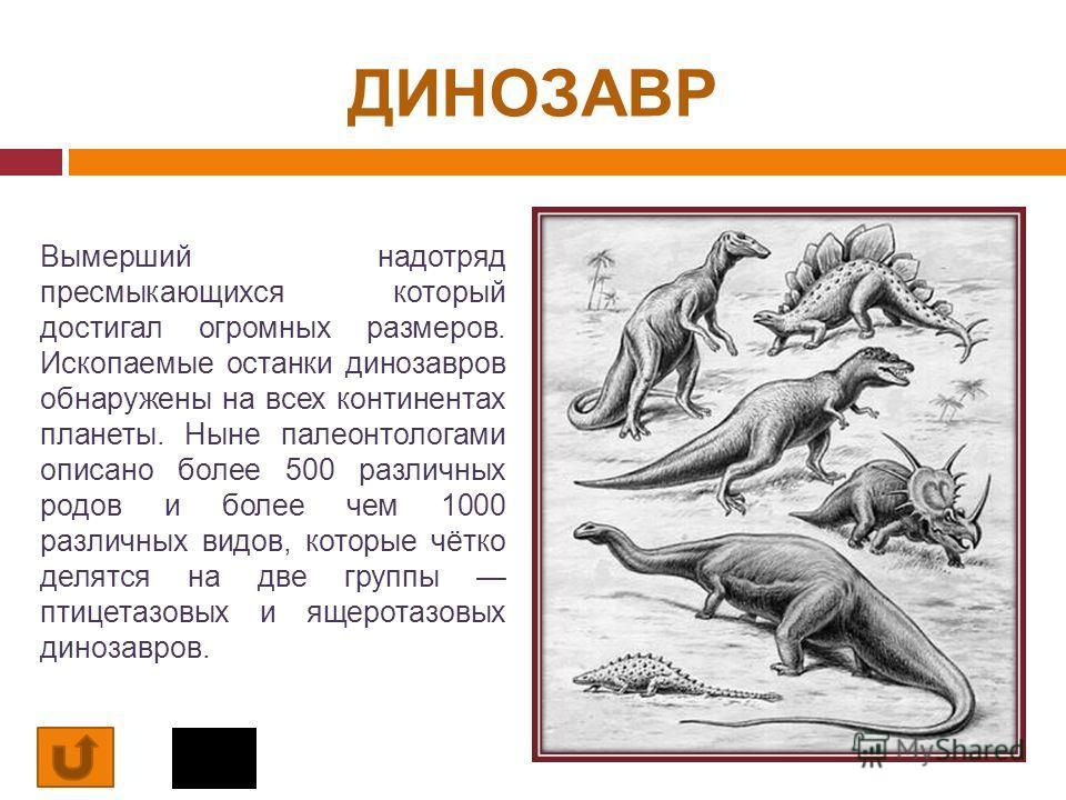 ДИНОЗАВР Вымерший надотряд пресмыкающихся который достигал огромных размеров. Ископаемые останки динозавров обнаружены на всех континентах планеты. Ныне палеонтологами описано более 500 различных родов и более чем 1000 различных видов, которые чётко