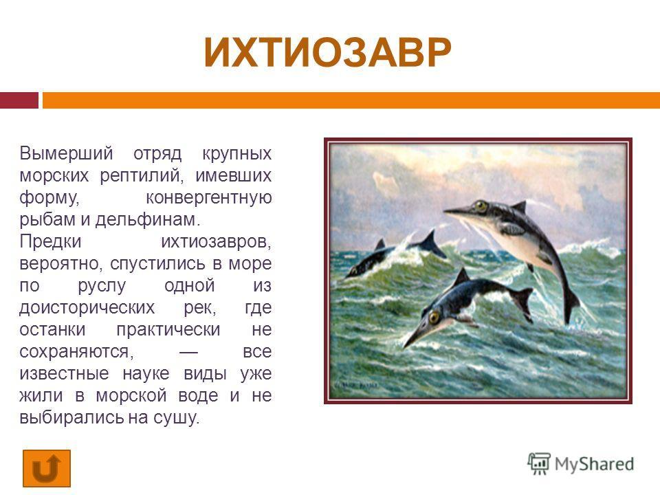 ИХТИОЗАВР Вымерший отряд крупных морских рептилий, имевших форму, конвергентную рыбам и дельфинам. Предки ихтиозавров, вероятно, спустились в море по руслу одной из доисторических рек, где останки практически не сохраняются, все известные науке виды
