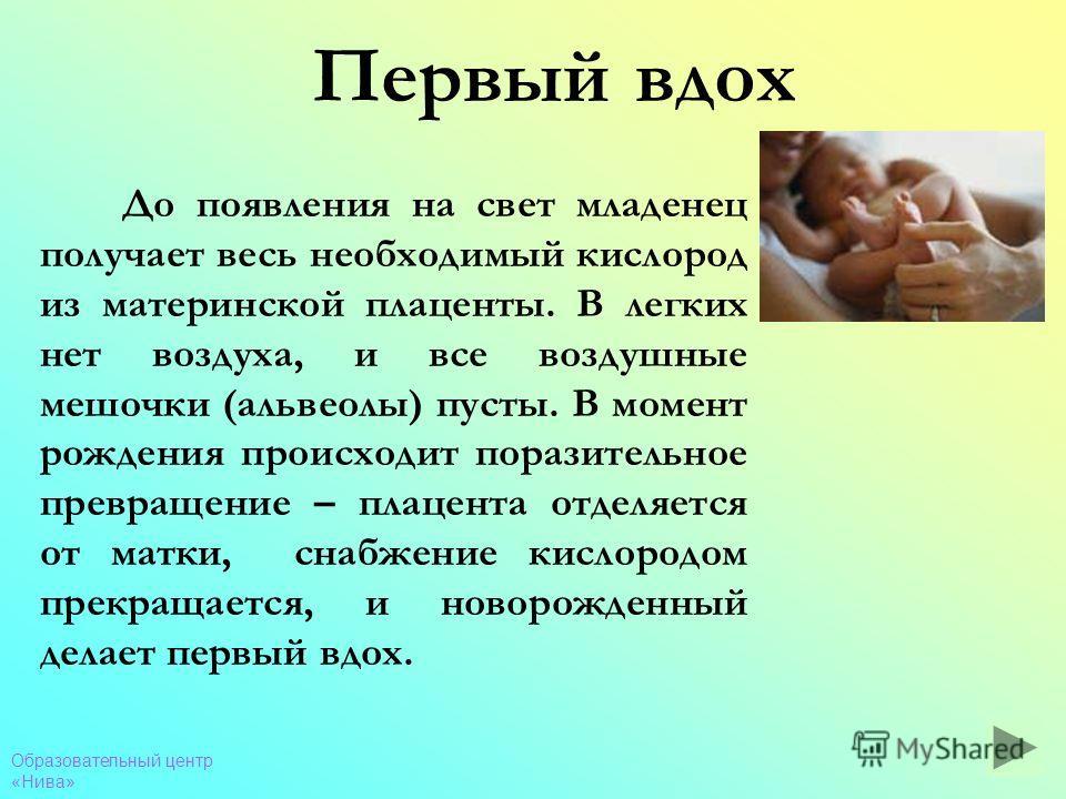Образовательный центр «Нива» Первый вдох До появления на свет младенец получает весь необходимый кислород из материнской плаценты. В легких нет воздуха, и все воздушные мешочки (альвеолы) пусты. В момент рождения происходит поразительное превращение