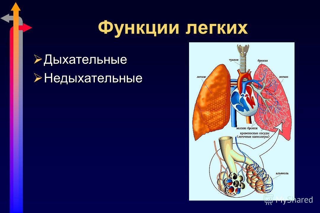 Функции легких Дыхательные Дыхательные Недыхательные Недыхательные