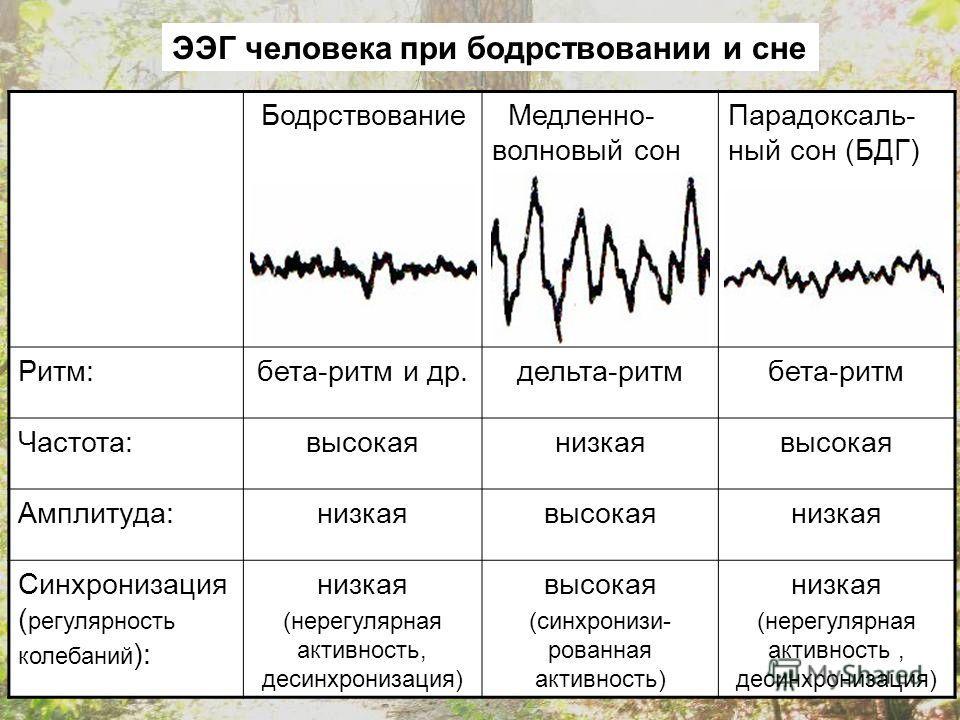 Бодрствование Медленно- волновый сон Парадоксаль- ный сон (БДГ) Ритм:бета-ритм и др.дельта-ритмбета-ритм Частота:высокаянизкаявысокая Амплитуда:низкаявысокаянизкая Синхронизация ( регулярность колебаний ): низкая (нерегулярная активность, десинхрониз