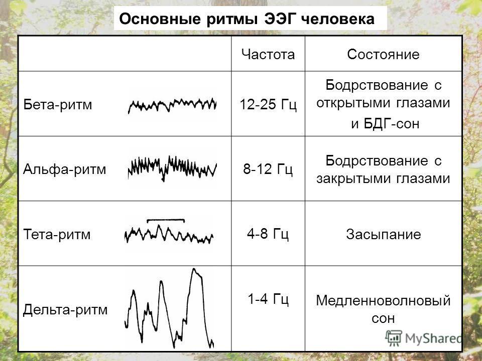 ЧастотаСостояние Бета-ритм12-25 Гц Бодрствование с открытыми глазами и БДГ-сон Альфа-ритм8-12 Гц Бодрствование с закрытыми глазами Тета-ритм4-8 ГцЗасыпание Дельта-ритм 1-4 Гц Медленноволновый сон Основные ритмы ЭЭГ человека