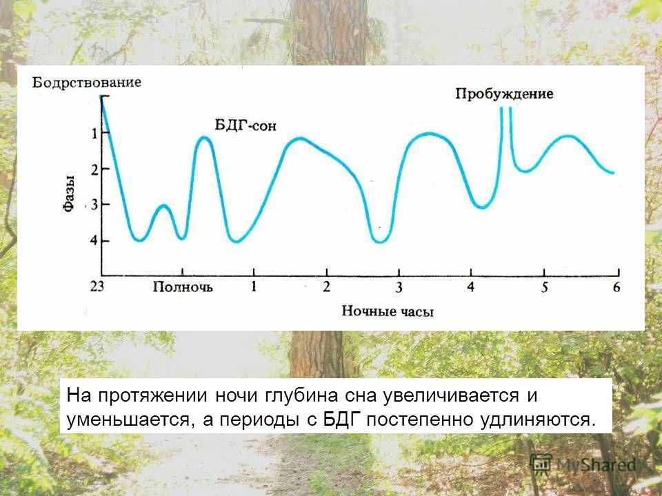 На протяжении ночи глубина сна увеличивается и уменьшается, а периоды с БДГ постепенно удлиняются.