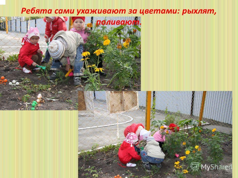 Ребята сами ухаживают за цветами: рыхлят, поливают.