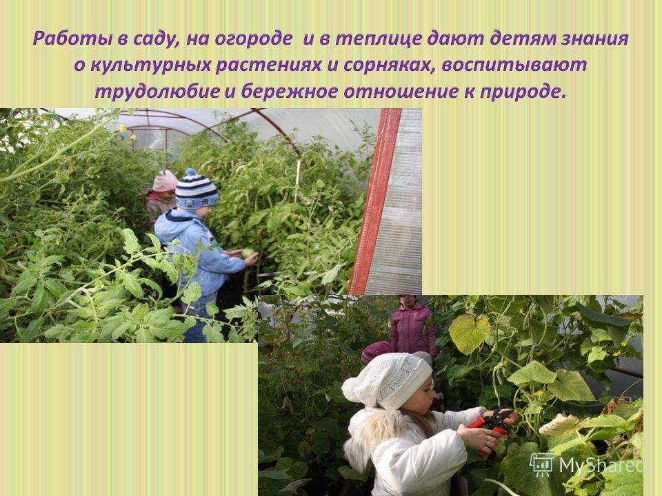 Работы в саду, на огороде и в теплице дают детям знания о культурных растениях и сорняках, воспитывают трудолюбие и бережное отношение к природе.
