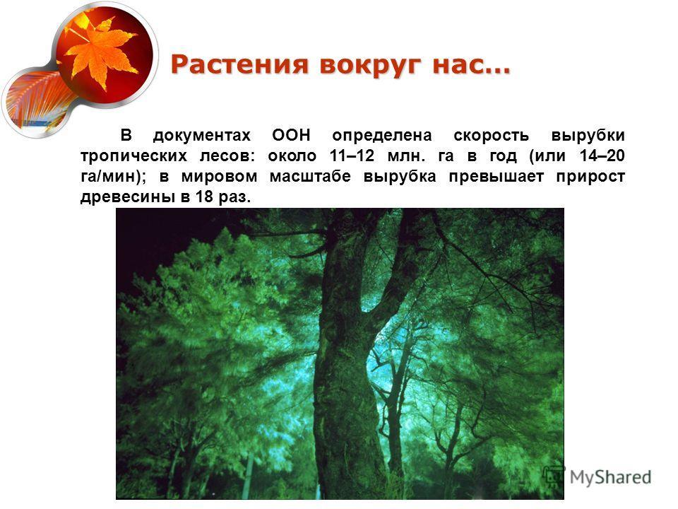 Растения вокруг нас… В документах ООН определена скорость вырубки тропических лесов: около 11–12 млн. га в год (или 14–20 га/мин); в мировом масштабе вырубка превышает прирост древесины в 18 раз.