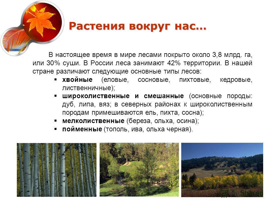 Растения вокруг нас… В настоящее время в мире лесами покрыто около 3,8 млрд. га, или 30% суши. В России леса занимают 42% территории. В нашей стране различают следующие основные типы лесов: хвойные (еловые, сосновые, пихтовые, кедровые, лиственничные