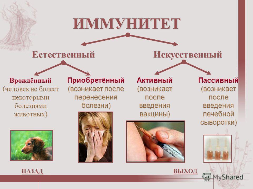 ИММУНИТЕТ ЕстественныйИскусственный Врождённый (человек не болеет некоторыми болезнями животных) Приобретённый (возникает после перенесения болезни) Активный (возникает после введения вакцины) Пассивный (возникает после введения лечебной сыворотки) Н