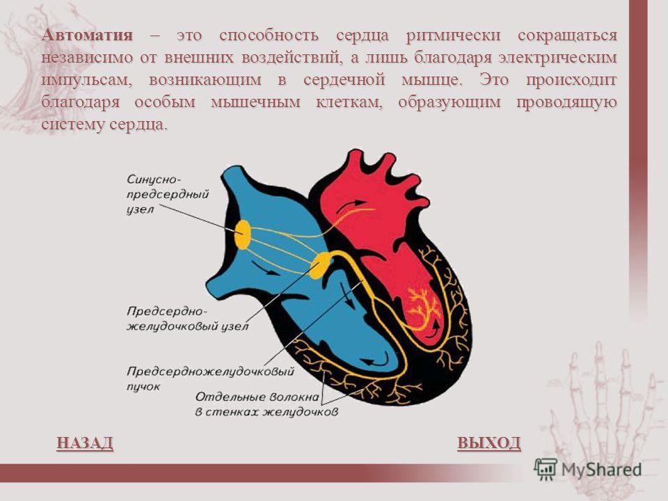 Автоматия – это способность сердца ритмически сокращаться независимо от внешних воздействий, а лишь благодаря электрическим импульсам, возникающим в сердечной мышце. Это происходит благодаря особым мышечным клеткам, образующим проводящую систему серд