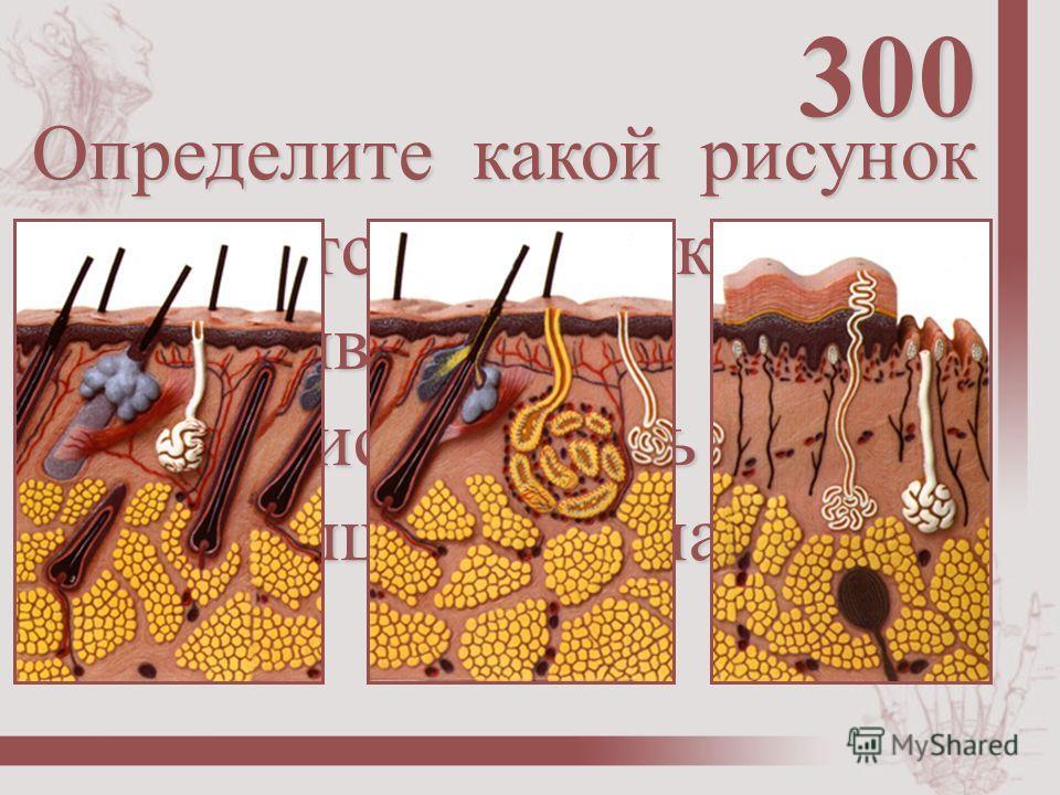 Определите какой рисунок относится к участку тела: а) подошва б) волосистая часть головы в) подмышечная впадина 300
