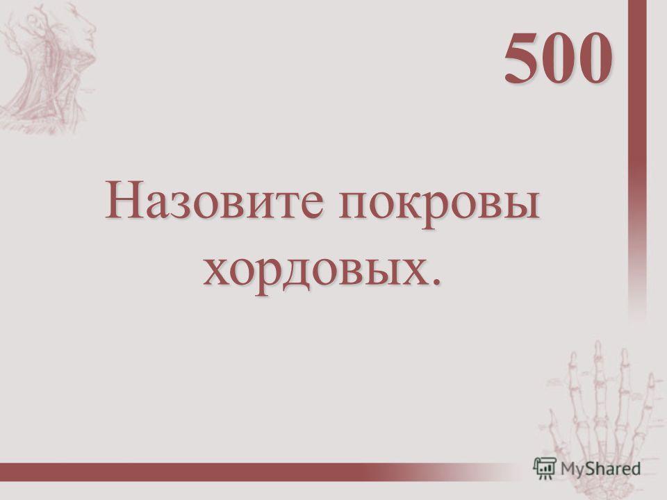 Назовите покровы хордовых. 500
