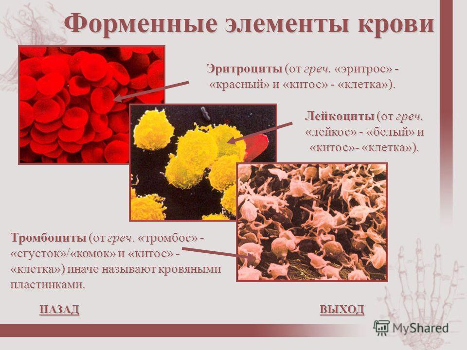 Тромбоциты (от греч. «тромбос» - «сгусток»/«комок» и «китос» - «клетка») иначе называют кровяными пластинками. Лейкоциты (от греч. «лейкос» - «белый» и «китос»- «клетка»). Эритроциты (от греч. «эритрос» - «красный» и «китос» - «клетка»). Форменные эл