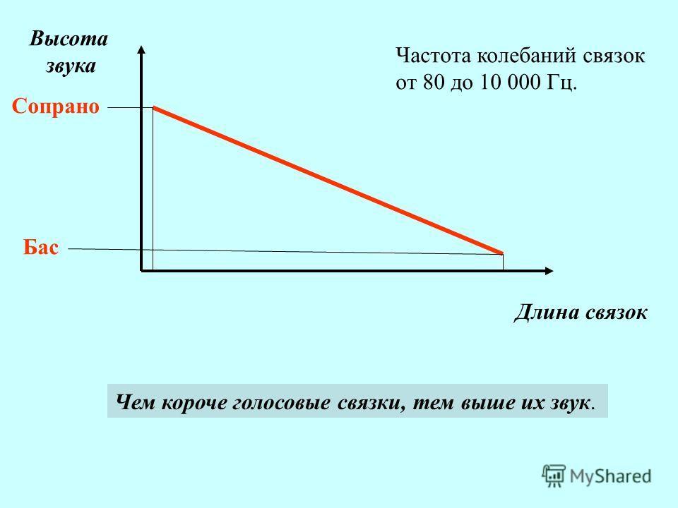 звукообразовани е Высота звука Длина связок Сопрано Бас Чем короче голосовые связки, тем выше их звук. Частота колебаний связок от 80 до 10 000 Гц.