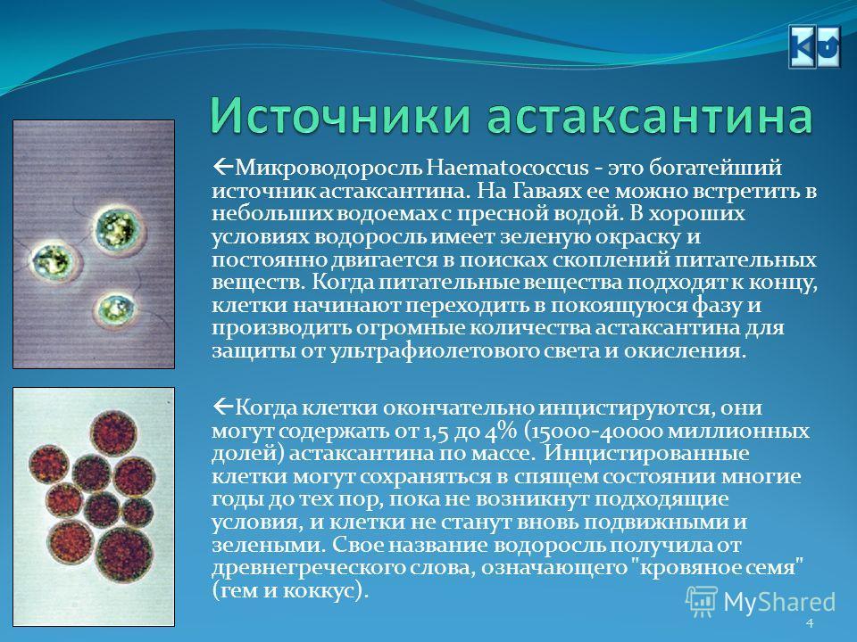 Астаксантин - это король семейства каротиноидов. Если сравнить его с бета- каротином, то можно увидеть, что он имеет два дополнительных атома кислорода (красные) на каждом из концевых колец, что придает ему глубокий красный цвет и делает его элитой к