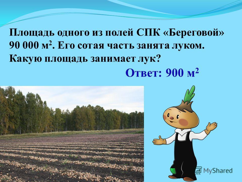 Ответ: 900 м 2 Площадь одного из полей СПК «Береговой» 90 000 м 2. Его сотая часть занята луком. Какую площадь занимает лук?