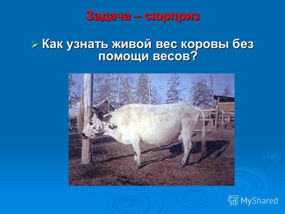 Задача – сюрприз Как узнать живой вес коровы без помощи весов? Как узнать живой вес коровы без помощи весов?