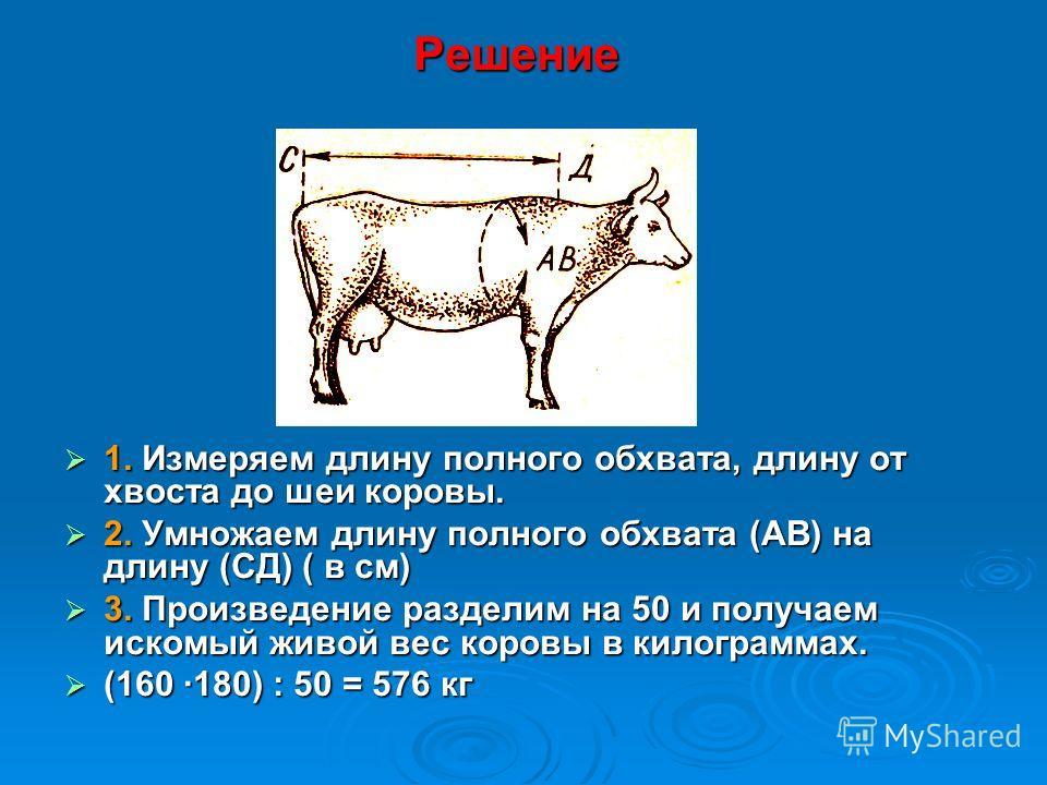 Решение 1. Измеряем длину полного обхвата, длину от хвоста до шеи коровы. 1. Измеряем длину полного обхвата, длину от хвоста до шеи коровы. 2. Умножаем длину полного обхвата (АВ) на длину (СД) ( в см) 2. Умножаем длину полного обхвата (АВ) на длину (