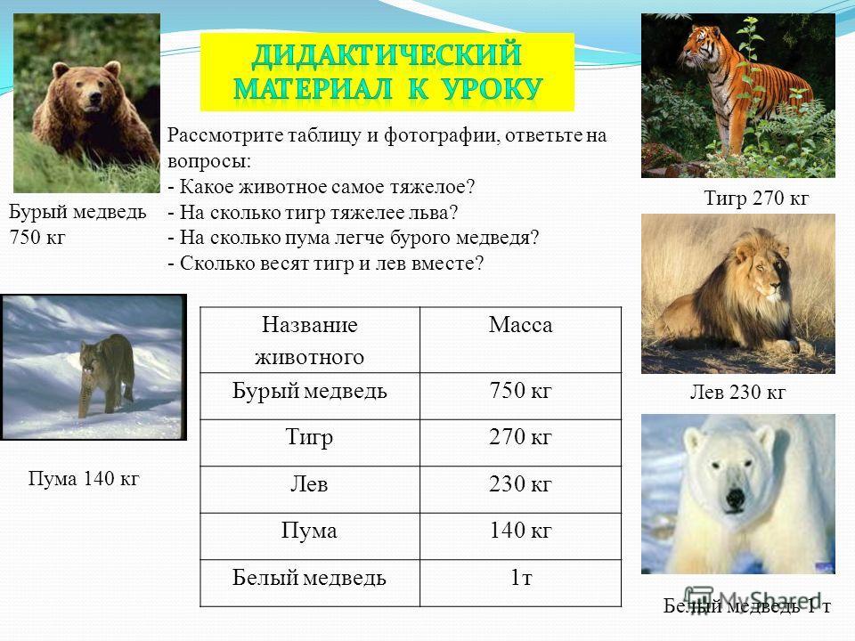 Рассмотрите таблицу и фотографии, ответьте на вопросы: - Какое животное самое тяжелое? - На сколько тигр тяжелее льва? - На сколько пума легче бурого медведя? - Сколько весят тигр и лев вместе? Бурый медведь 750 кг Пума 140 кг Белый медведь 1 т Лев 2