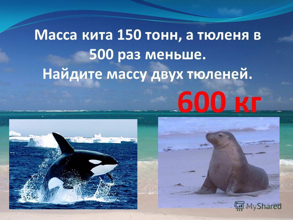 Масса кита 150 тонн, а тюленя в 500 раз меньше. Найдите массу двух тюленей. 600 кг