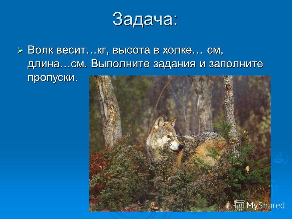 Задача: Волк весит…кг, высота в холке… см, длина…см. Выполните задания и заполните пропуски. Волк весит…кг, высота в холке… см, длина…см. Выполните задания и заполните пропуски.
