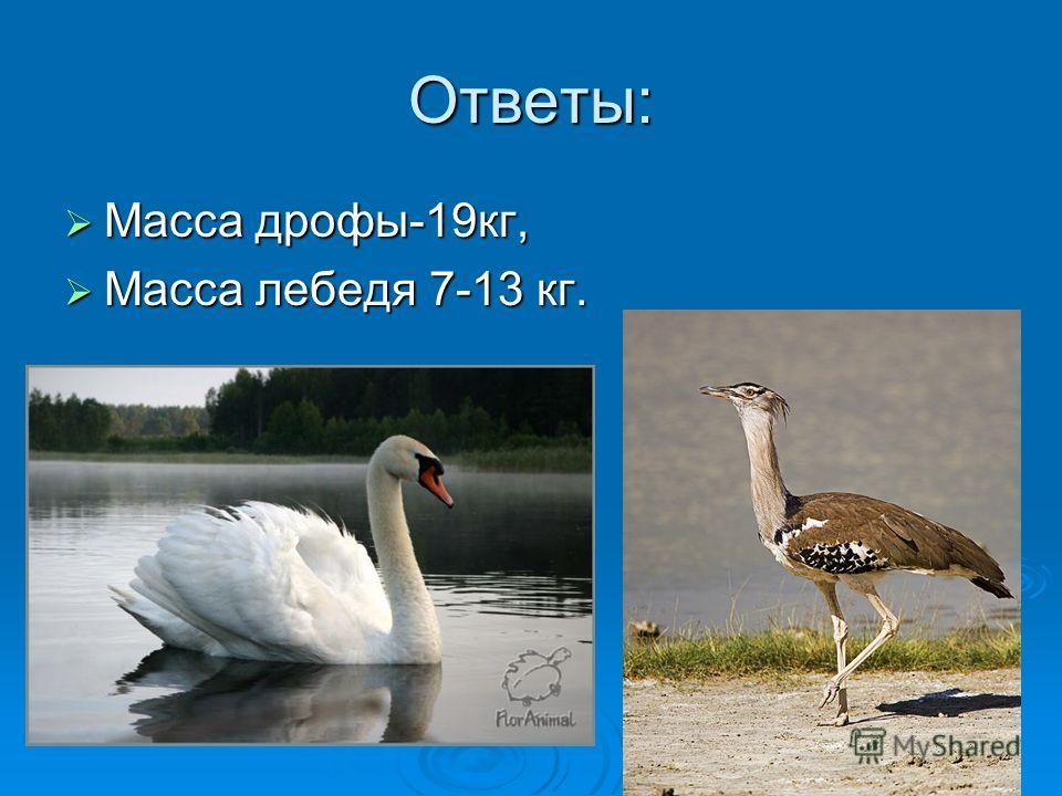 Ответы: Масса дрофы-19кг, Масса дрофы-19кг, Масса лебедя 7-13 кг. Масса лебедя 7-13 кг.