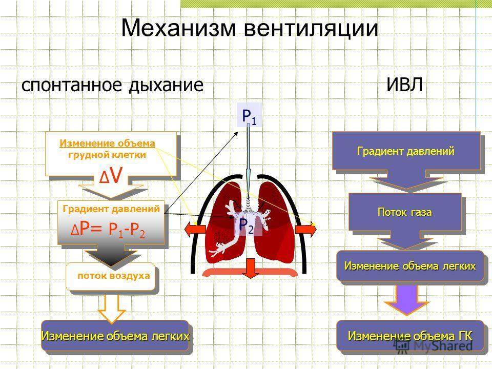 Изменение объема легких Механизм вентиляции Изменение объема грудной клетки поток воздуха Градиент давлений Поток газа Градиент давлений ΔVΔV P1P1 P2P2 Δ P= P 1 -P 2 спонтанное дыханиеИВЛ Изменение объема легких Изменение объема ГК