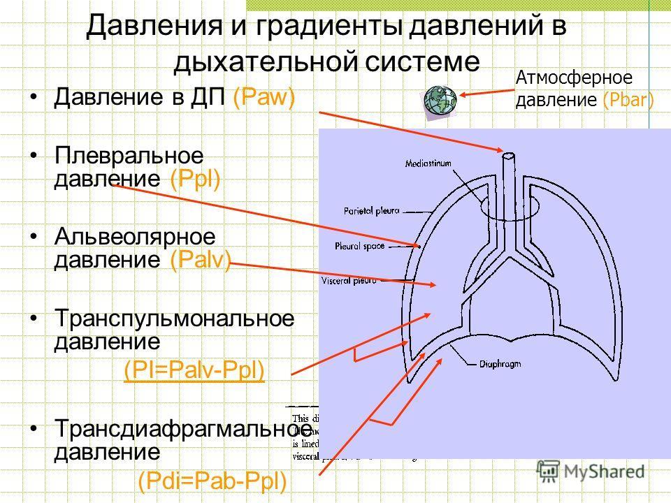 Давления и градиенты давлений в дыхательной системе Давление в ДП (Paw) Плевральное давление (Ppl) Альвеолярное давление (Palv) Транспульмональное давление (PI=Palv-Ppl) Трансдиафрагмальное давление (Pdi=Pab-Ppl) Атмосферное давление (Pbar)
