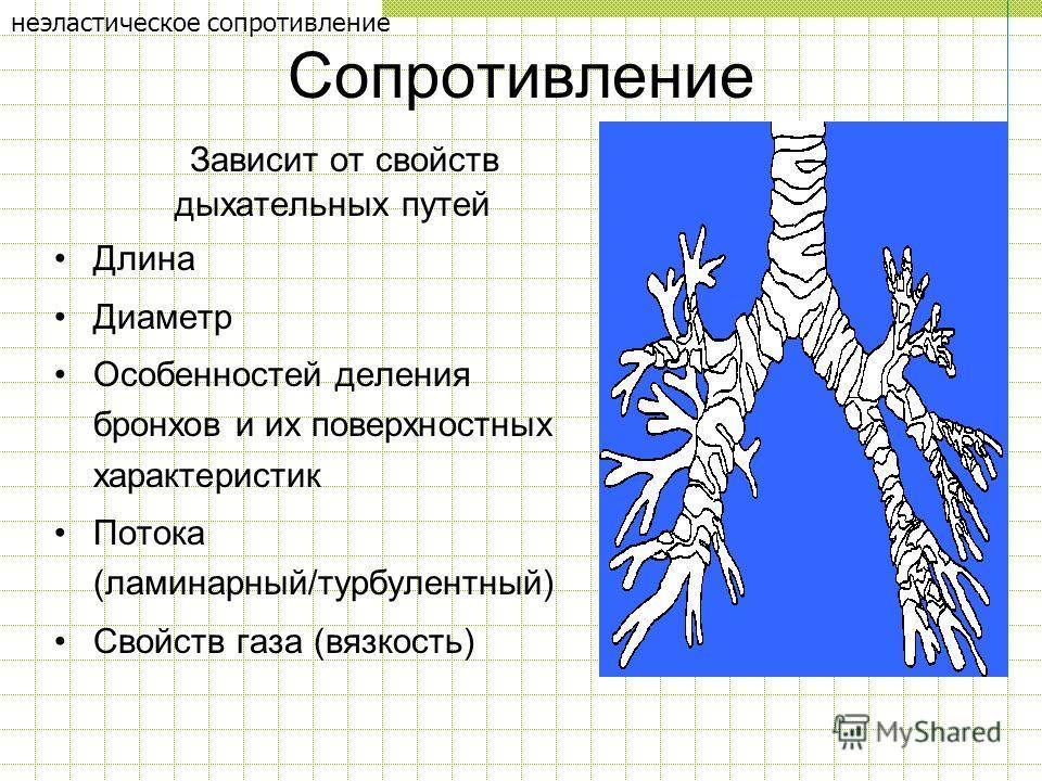 Сопротивление Зависит от свойств дыхательных путей Длина Диаметр Особенностей деления бронхов и их поверхностных характеристик Потока (ламинарный/турбулентный) Свойств газа (вязкость) неэластическое сопротивление