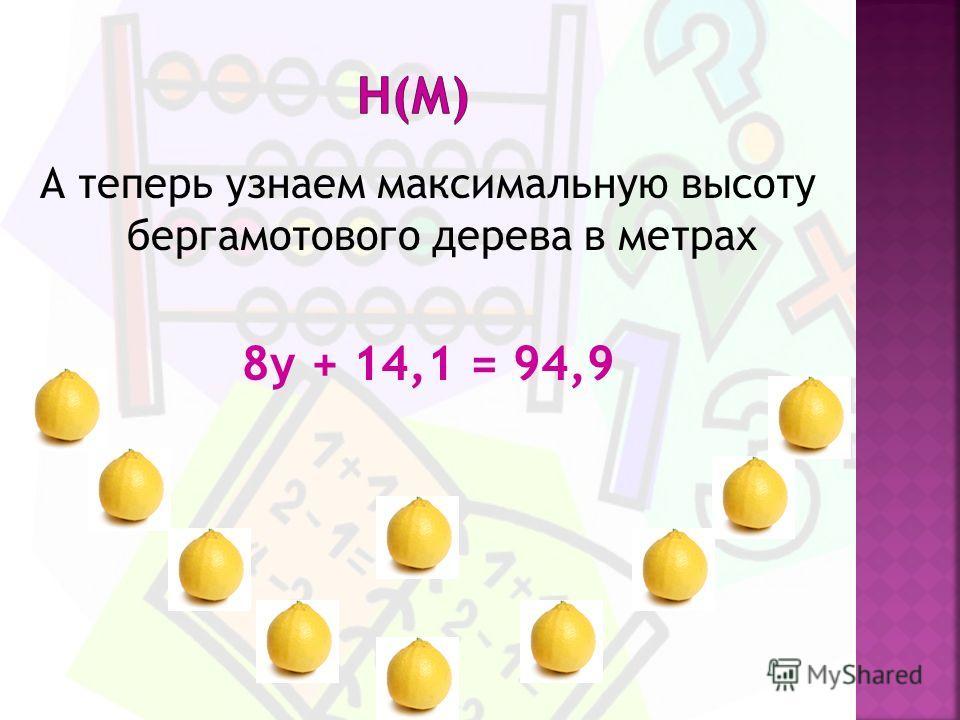 А теперь узнаем максимальную высоту бергамотового дерева в метрах 8у + 14,1 = 94,9