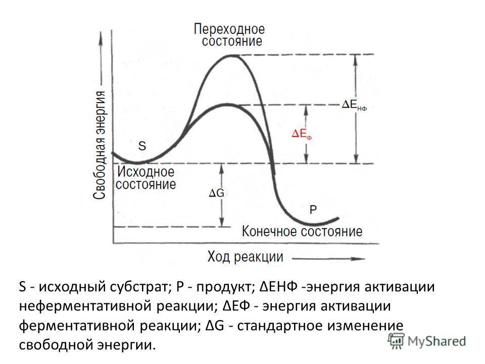 S - исходный субстрат; Р - продукт; ΔЕНФ -энергия активации неферментативной реакции; ΔЕФ - энергия активации ферментативной реакции; ΔG - стандартное изменение свободной энергии.