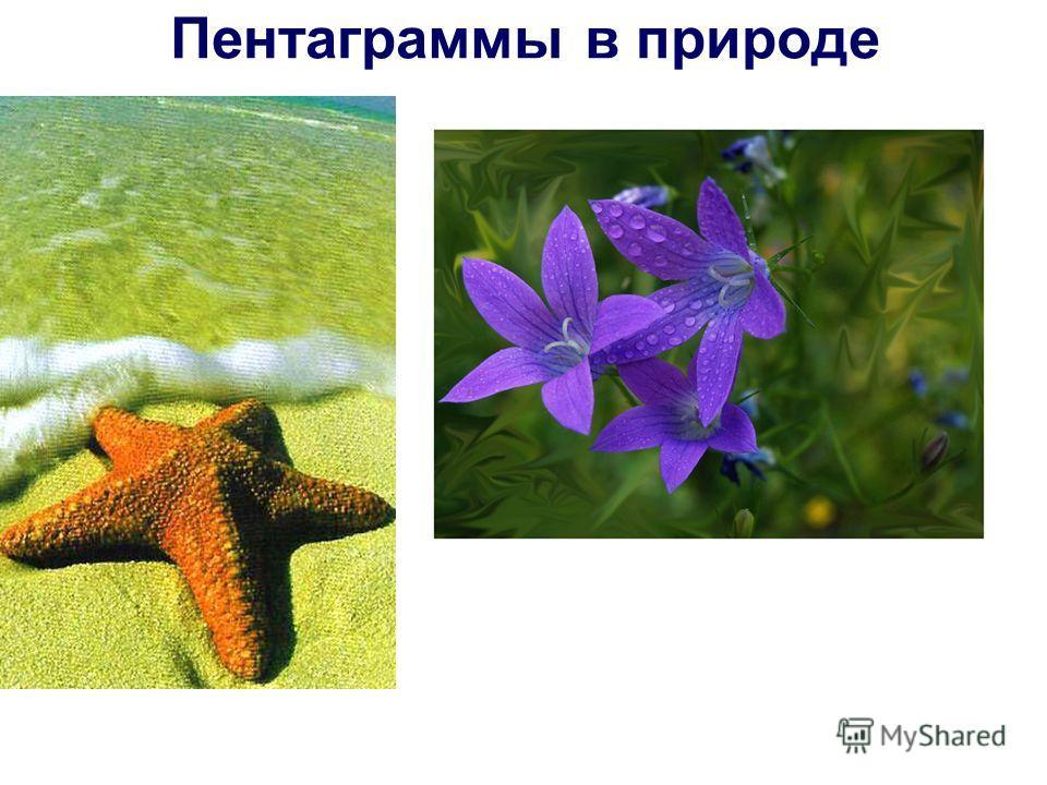 Пентаграммы в природе