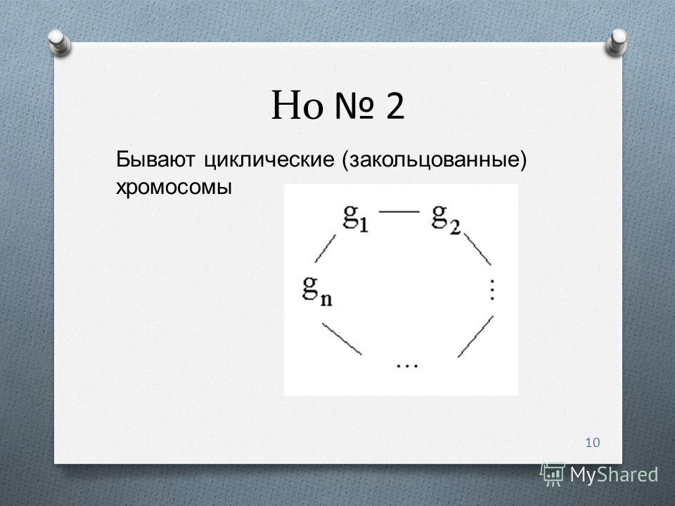 Но 2 10 Бывают циклические ( закольцованные ) хромосомы