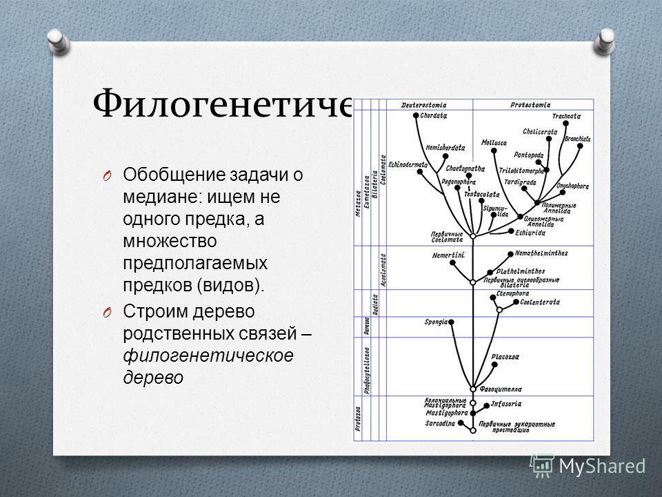 Филогенетическое дерево 25 O Обобщение задачи о медиане : ищем не одного предка, а множество предполагаемых предков ( видов ). O Строим дерево родственных связей – филогенетическое дерево