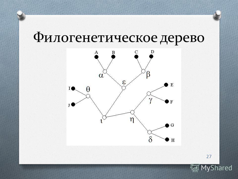 Филогенетическое дерево 27
