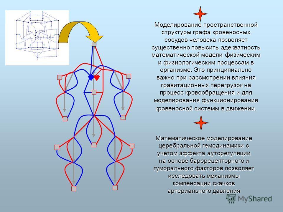 Моделирование пространственной структуры графа кровеносных сосудов человека позволяет существенно повысить адекватность математической модели физическим и физиологическим процессам в организме. Это принципиально важно при рассмотрении влияния гравита