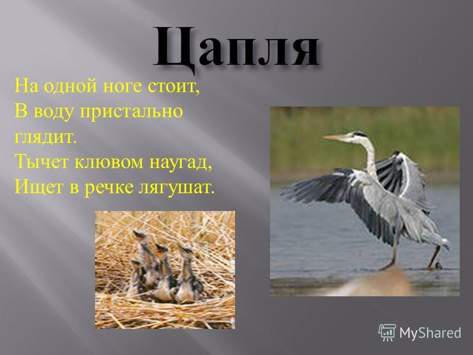 На одной ноге стоит, В воду пристально глядит. Тычет клювом наугад, Ищет в речке лягушат.
