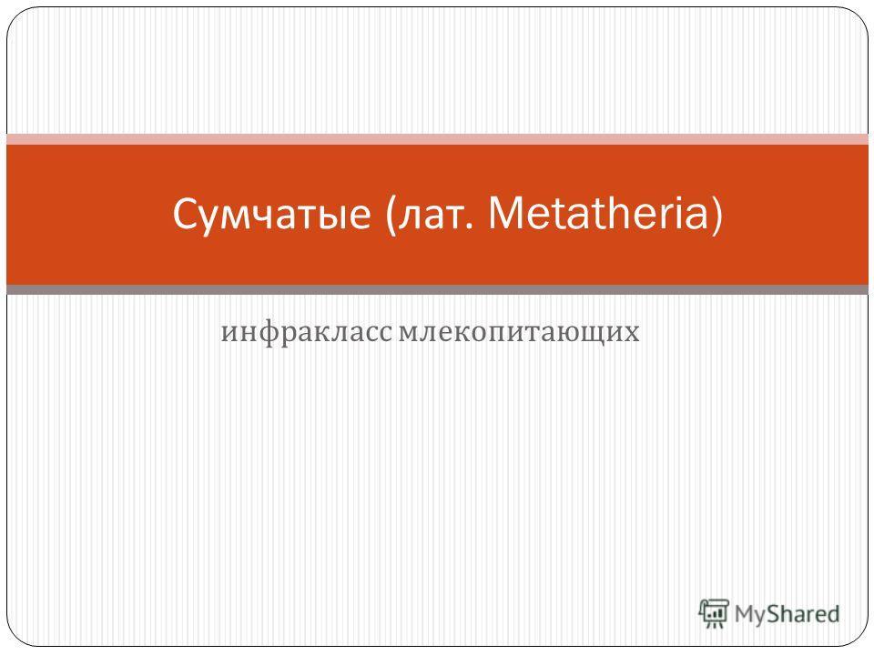 инфракласс млекопитающих Сумчатые ( лат. Metatheria)