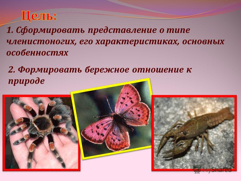 1. Сформировать представление о типе членистоногих, его характеристиках, основных особенностях 2. Формировать бережное отношение к природе
