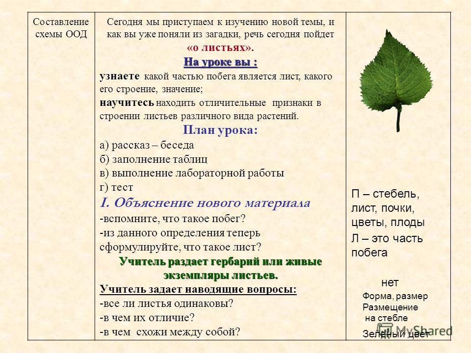 Составление схемы ООД Сегодня мы приступаем к изучению новой темы, и как вы уже поняли из загадки, речь сегодня пойдет «о листьях». На уроке вы : узнаете узнаете какой частью побега является лист, какого его строение, значение; научитесь находить отл