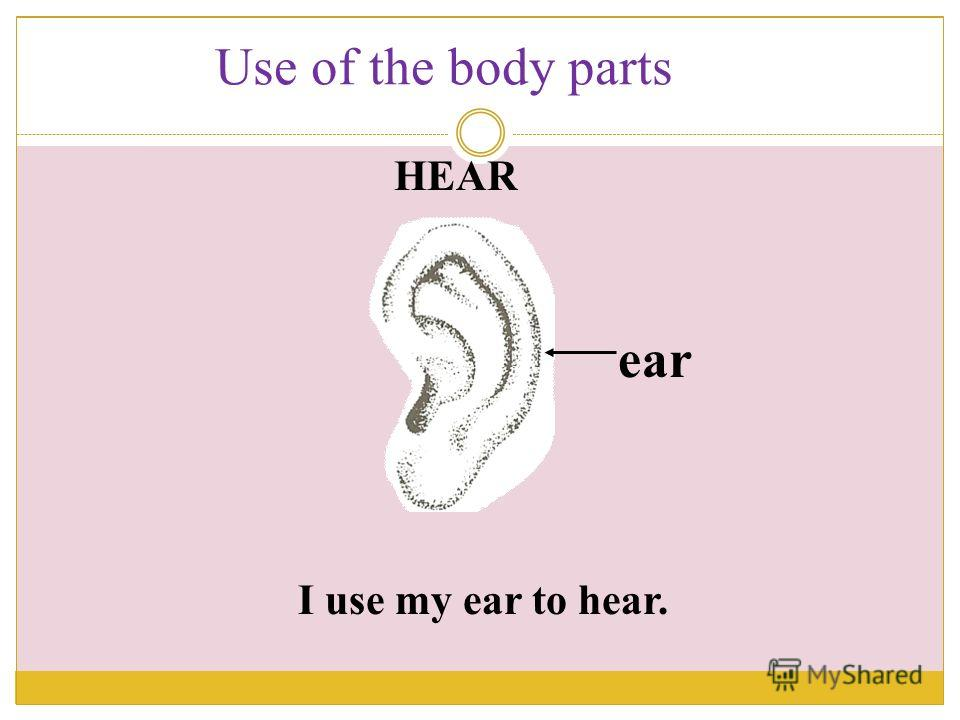 I use my ear to hear. ear HEAR Use of the body parts
