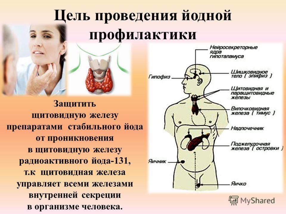 Цель проведения йодной профилактики Защитить щитовидную железу препаратами стабильного йода от проникновения в щитовидную железу радиоактивного йода-131, т.к щитовидная железа управляет всеми железами внутренней секреции в организме человека.