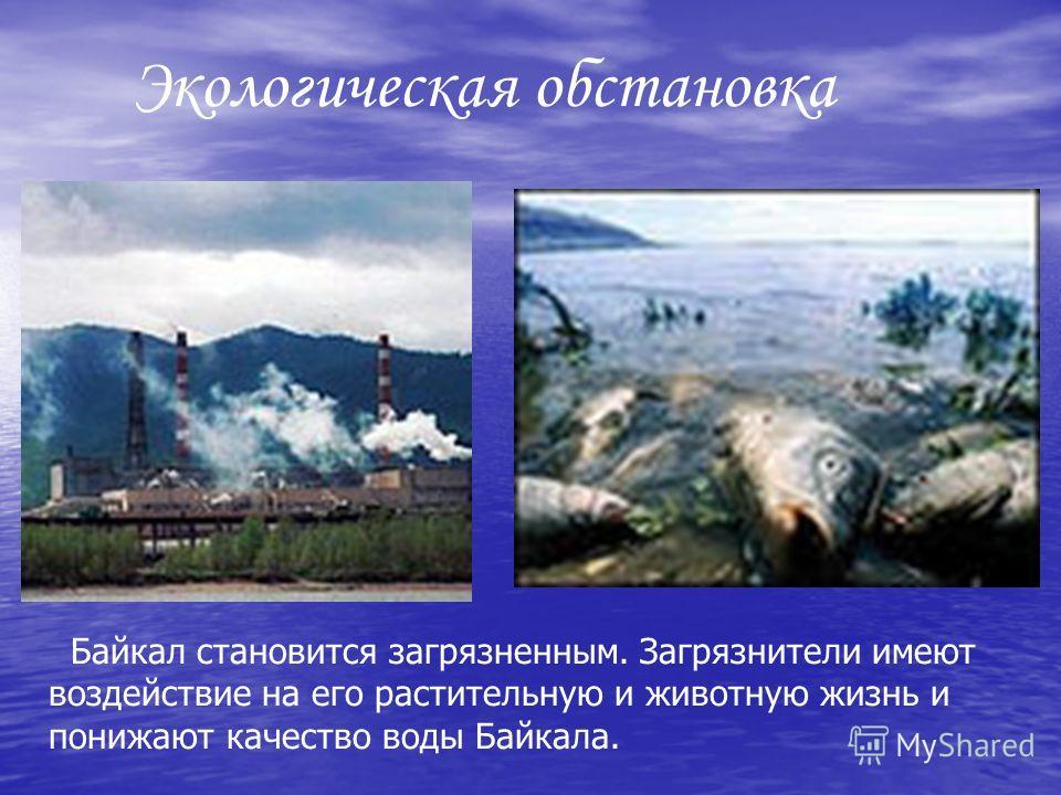 Байкал становится загрязненным. Загрязнители имеют воздействие на его растительную и животную жизнь и понижают качество воды Байкала.