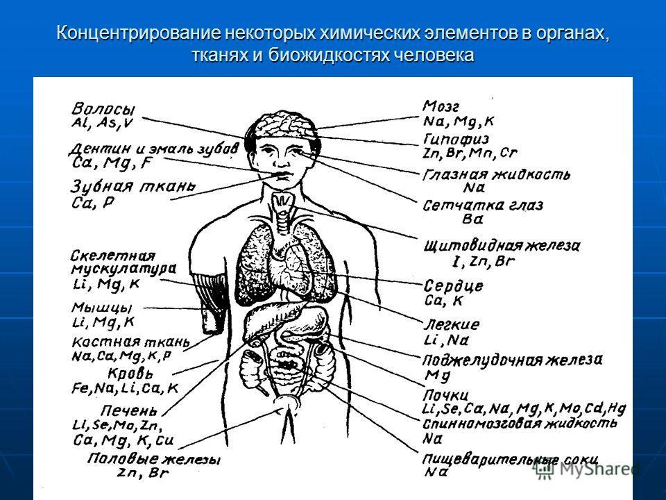 Концентрирование некоторых химических элементов в органах, тканях и биожидкостях человека