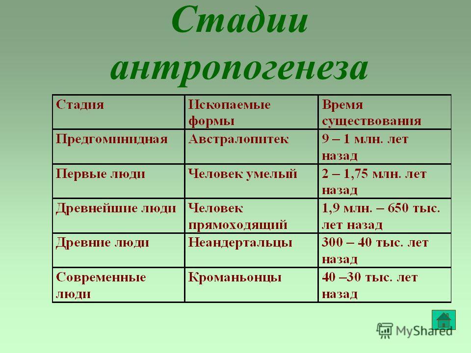 Стадии антропогенеза